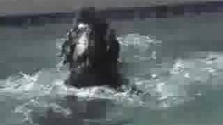 "Scuba ""tank""  Underwater Dog Skills! - Sit Means Sit"