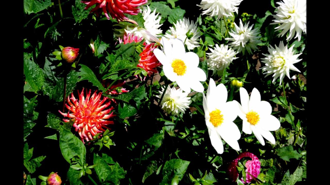 Ed Sheeran Supermarket Flowers übersetzung