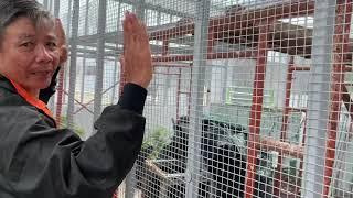 Iguana House . P3/5 Xây Chuồng Iguana Khổng Lồ ( make a giant cage for iguana )