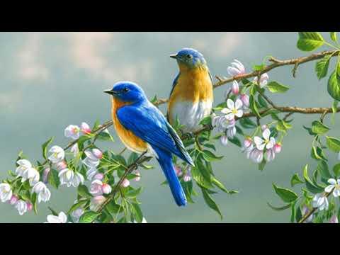 Birds Song Ringtone Alarm | Free Ringtones Downloads
