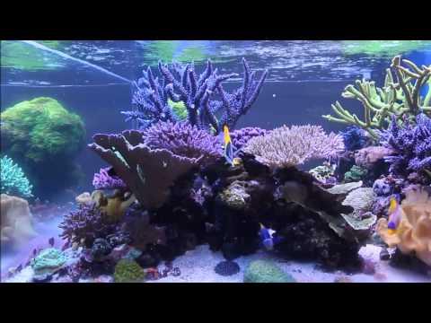 Dakota Reef's Cube Aquarium   April 2013