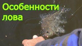 Рыбалка.  Ловля на пружины на течении и разговор с индюком. My fishing
