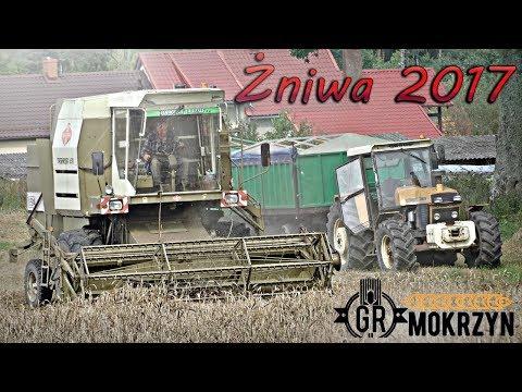 Żniwa w GR Mokrzyn [ 2x URSUS & 4x FORTSCHRITT ] Transport zboża na silosy ☆ GoPro #18 ㋡ Bronczek