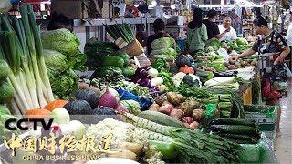 """[中国财经报道] 原产地访价格 """"蔬菜之乡""""大棚种植长势喜人 科技种养保量稳价   CCTV财经"""