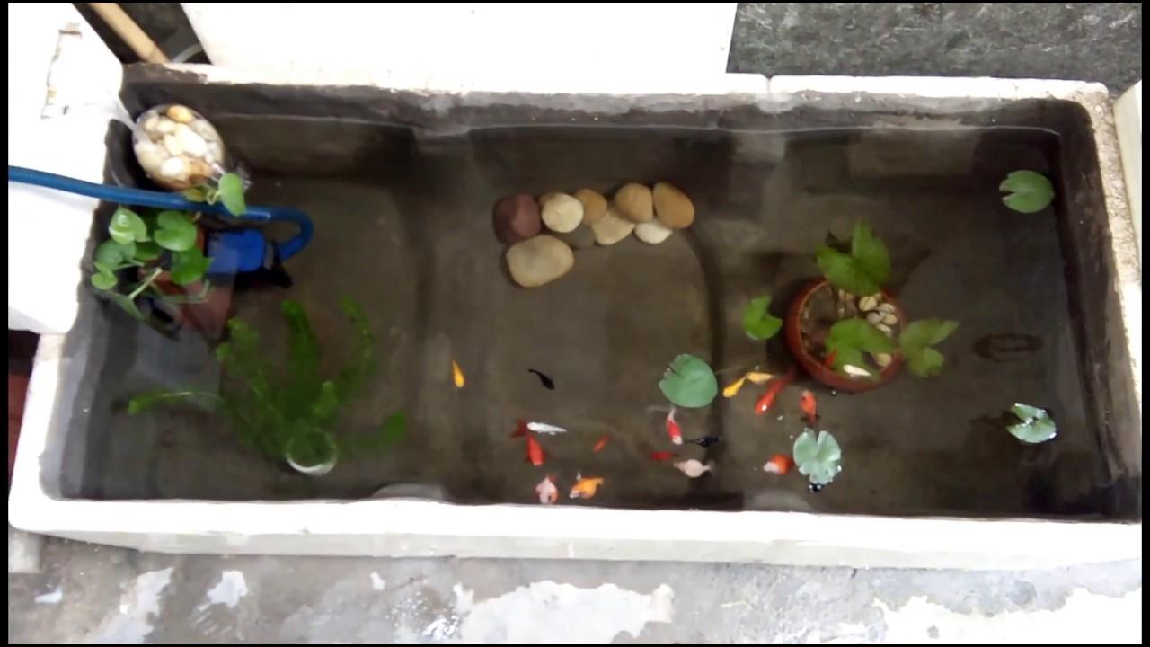Toàn cảnh bể cá thùng xốp sau hơn 1 tháng