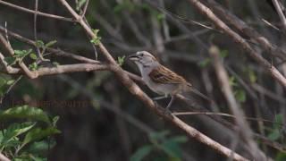 Birding Ecuador Part Iv; The Southwest