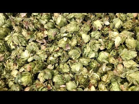 Making It Grow - Persimmon Hill Hops