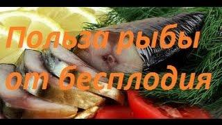 Польза рыбы от бесплодия