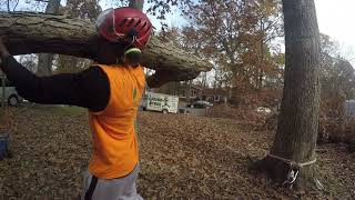 Tree removal and pruning, Grubb Tree, Charlottesville VA