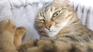 爪を切られることが分かり不機嫌になった猫がこちらです。
