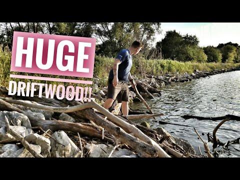 Wild, Large Driftwood For Aquarium: How to Prepare