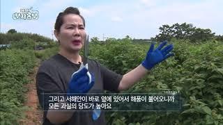 역전의 부자농부 45회 - 오디 & 복분자