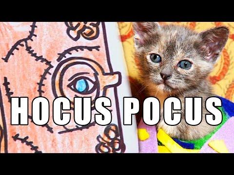 HOCUS POCUS (Cute Kitten Version)