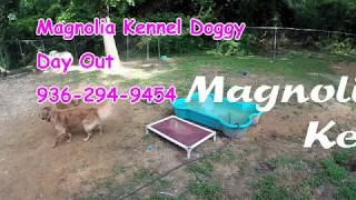 Magnoia Kennel of Huntsville - Doggy Day Out