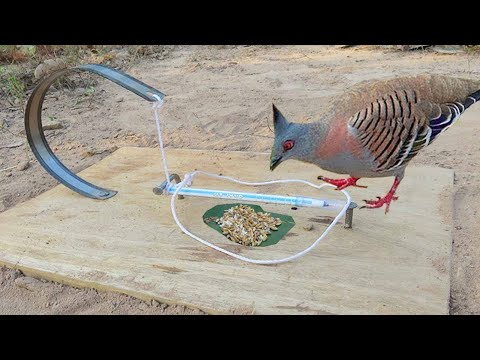 Unbelievably Helpful DIY Colored Pencil Bird Trap