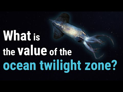 Value Beyond View: The Ocean Twilight Zone
