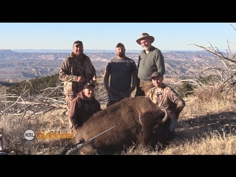 Henry Mountain Bison Hunt