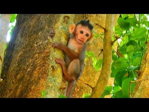 Bravo small girl Maci can climb up high tree  Monkey Post