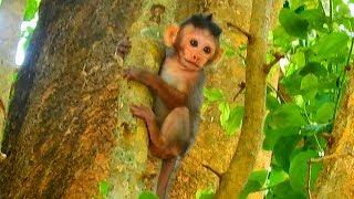 Baixar Bravo small girl Maci can climb up high tree / Monkey Post