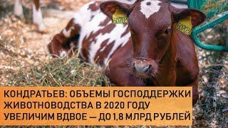 Кондратьев: объемы господдержки животноводства в 2020 году увеличим вдвое — до 1,8 млрд рублей
