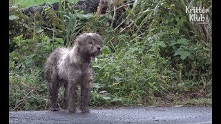 Mama Dog Left Alone In The Wake Of A Natural Disaster | Kritter Klub