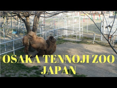 Osaka Tennoji Zoo- Japan