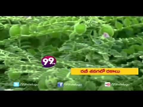 Black Rice Cultivation || Arbi Cultivation - Eruvaka - 19-01-2015 - 99tv