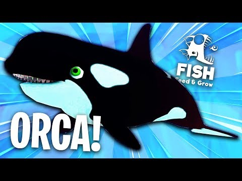 🐟 NOWY OGROMNA ORKA! POSTRACH PINGWINÓW! | Feed and Grow: Fish (Nowy Update)