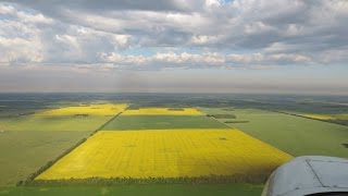 The Yellow Fields of Alberta