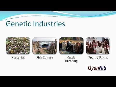 Industries | Classification of Industries