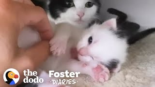 Cat Surprises Her Foster Mom With Kittens | The Dodo Foster Diaries