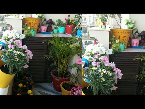 April balcony Garden overview with gardening tips/organic gardening landscape/Anvesha,s creativity