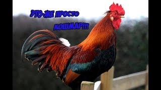 Интересные факты о животных...Возможно Вы о них даже не слышали!!!