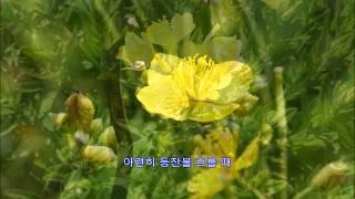 산골짝의 등불 - 숭실 OB 남성합창단:  충북 진천,…