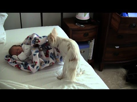 ''Dogs are the best baby caregivers'' - Dog Loves Babies Video 2017
