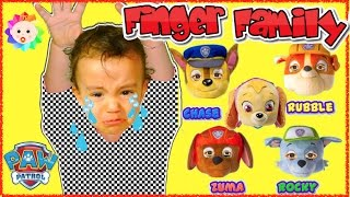 Bad Baby crying and learn colors with Paw Patrol Skye, Chase and Zuma- Finger Family Song Collection
