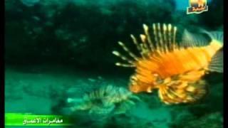 عالم البحار الاسماك