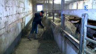 SIA 2015 : La ferme de Bérénice