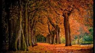 """Svyatoslav Kurashov - River (""""Svoi'' Soundtrack)"""