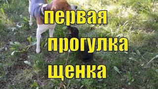 Социализация собаки. правила и ошибки. Первый раз щенок на улице. Моя такса.