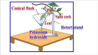 CLASS 10 SCIENCE ACTIVITY LIFE PROCESS [photosynthesis]