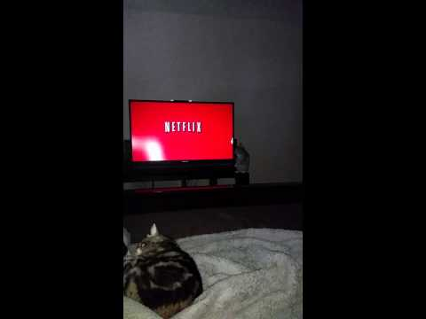Entertainment waiting for Netflix