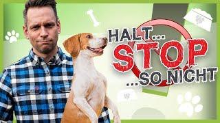 ▶ So stoppst Du deinen Hund in JEDER Situation [100%iges Abbruchsignal]