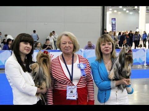 International Dog Show EURASIA II 2018, Yorkshire Terriers