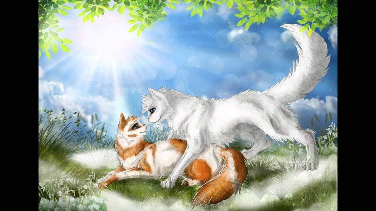 Коты воители картинки белохвоста