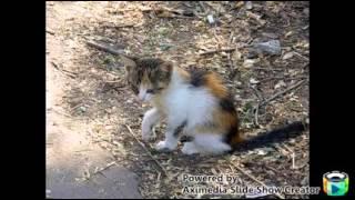 Кошка беспородная. Клип.