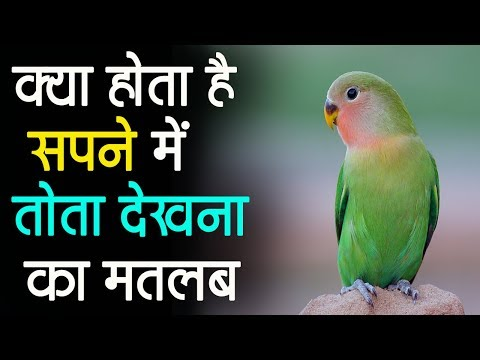 सपने में तोता देखना // Parrot Dream Meaning in Hindi