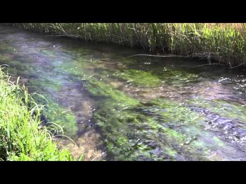Rivers Kennet & Lambourn - 2015 UK River Prize Finalist