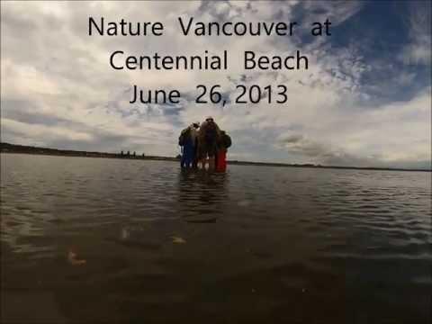 Nature Vancouver at Centennial Beach - June 26 , 2013