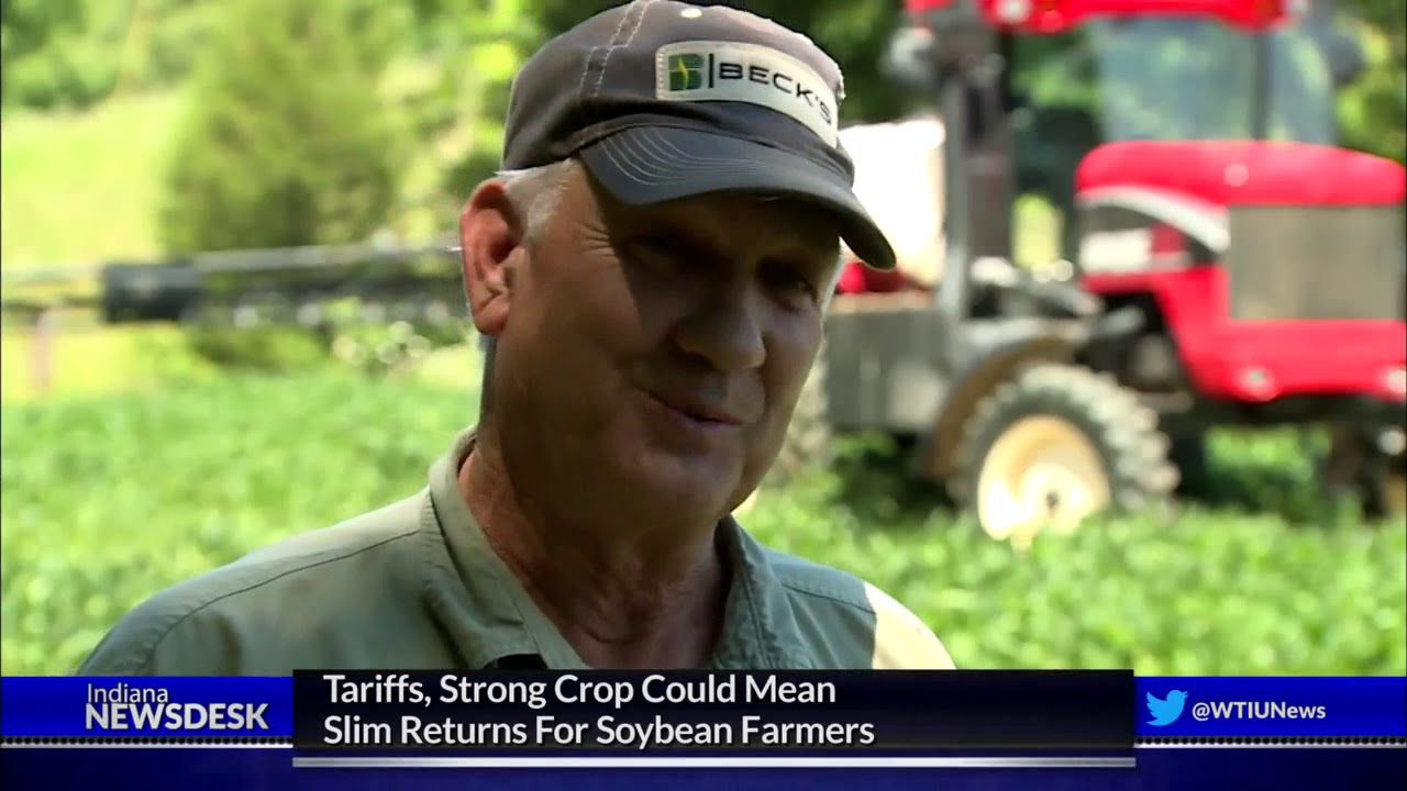 Tariffs, Strong Crop Could Mean Slim Returns For Soybean Farmers